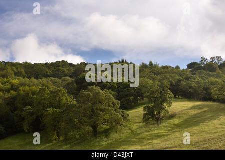 Oak woodland in Sonoma County, California, USA - Stock Image