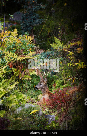 Deer in forest - Stock Image
