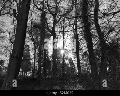 Sun through silhouetted branches. - Stock Image