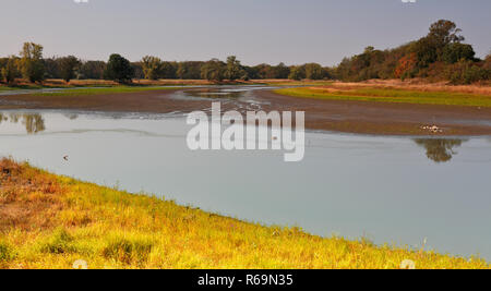 Almost dried out branch of the Elbe river, extreme low water of the Elbe in dry summer 2018, Middle Elbe Biosphere Reserve - Stock Image
