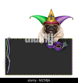 Mardi gras carnival pug dog with carnival hat, beads, harlequin jester hat and venetian mask hanging on blackboard - Stock Image