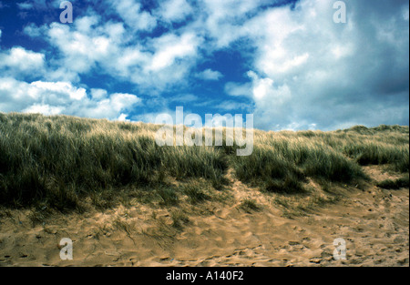 Marram Grass, Ammophila arenaria, on a Wild Beach in Gwynedd Wales - Stock Image