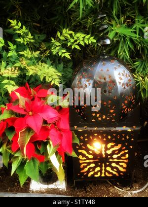 Red poinsettia and lantern Christmas decorations - Stock Image