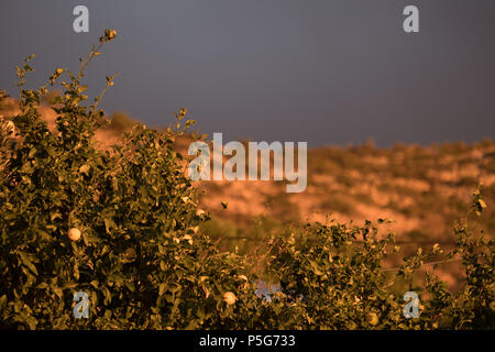 Greek mountain, Golden hour beautiful light with grey clouds, Lemon Tree. Saronida, Greece. - Stock Image
