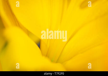 Artistic View of Lilly Flowers - Stock Image