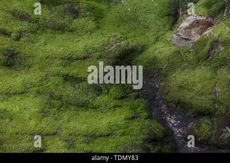 View from above on green moss on the rock - Stock Image
