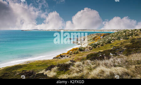 Turquoise water and white sandy beaches of Falkland Islands coastline. Gypsy Cove, East Falkland Island. - Stock Image