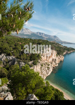 Pine trees on cliff over hidden beach and calm blue sea in Croatia - Stock Image
