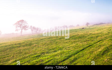 A grassy field for sheep grazing begins to fill with fog in Shropshire, England. - Stock Image
