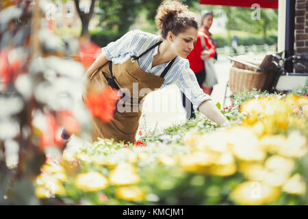 Female florist checking plants at sunny flower shop storefront - Stock Image