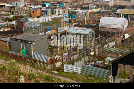 Group of Allotment plots where land is parcelled up for gardeners to grow there own vegetables as a hobby - Stock Image