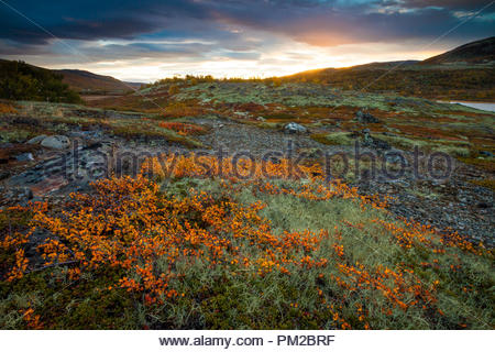 Autumn sunrise near the lake Avsjøen, Dovre, Norway. The orange colored shrub in the foreground is Dwarf Birch, Betula nana. - Stock Image