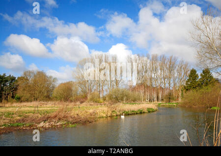 A view of the River Bure from the riverside path upstream of the village of Coltishall, Norfolk, England, United Kingdom, Europe. - Stock Image