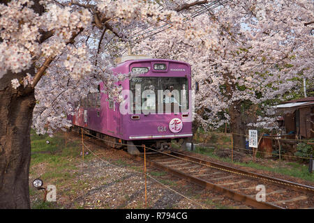 Local purple train going through a tunnel formed by branches of  cherry blossom trees in bloom. Can see driver in front window - Stock Image