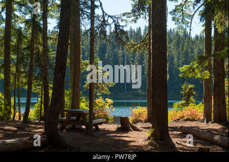 One of the camp sites at Hideaway Lake, in Oregon's Mt. Hood National Forest. - Stock Image