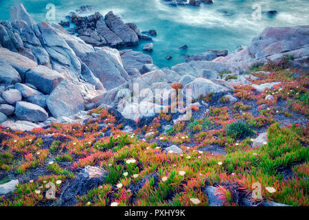 Ice plant in bloom and ocean. 17 Mile Drive. Pebble Beach, California - Stock Image