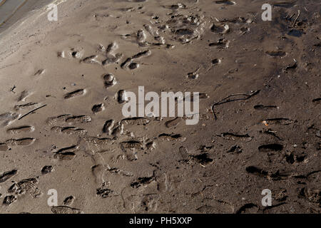 Footprints in the mud, Ullswater, Lake District National Park, Cumbria, England, UK - Stock Image