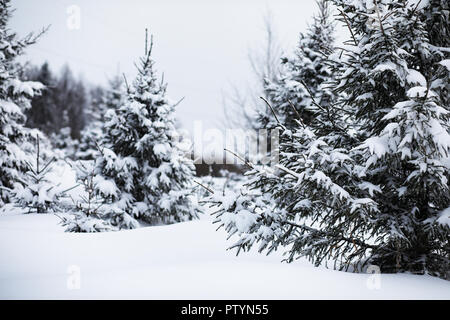 Landscape in the winter cloudy day of snow-covered fields and forests - Stock Image