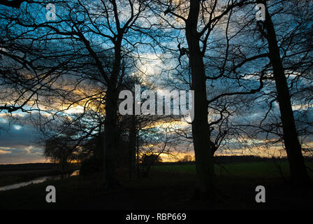 Beech trees in winter – silhouette - Stock Image