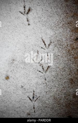 Bird footprints in snow. - Stock Image