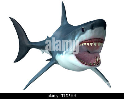 Megalodon was an enormous carnivorous shark that roamed the oceans of the Pleistocene Period. - Stock Image