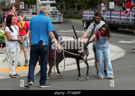 Anchorage, Alaska. 4th July, 2018. People stop to pet Star the Reindeer during the annual Independence Day parade July 4, 2018 in Anchorage, Alaska. Credit: Planetpix/Alamy Live News - Stock Image