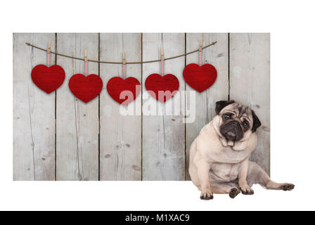Cute pug puppy dog sitting down next to wooden fence of used scaffolding wood with red hearts, isolated on white - Stock Image