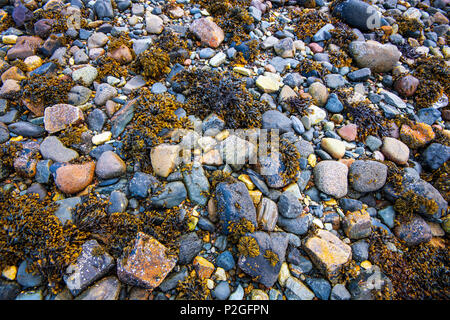A poster of coloured stones and seaweed on the shores of Loch Linnhe in the Highlands of Scotland - Stock Image