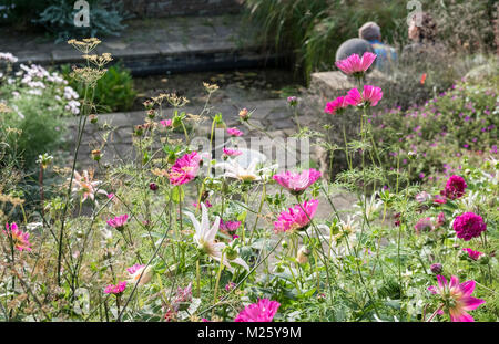 Late summer cottage style pink and white flowering garden, Harlow Carr Gardens, North Yorkshire, England UK - Stock Image