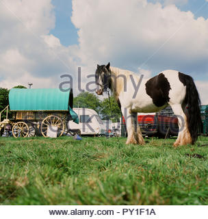 Stow-on-the Wold horse fair, in Gloucestershire, UK. - Stock Image