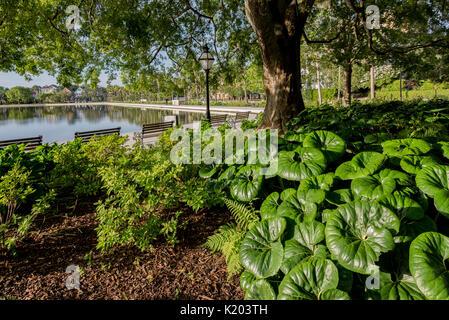 America, Charleston, South Carolina Colonial Lake, a tidal pond - Stock Image