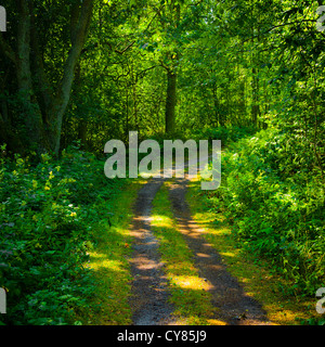 Path through the woods. - Stock Image