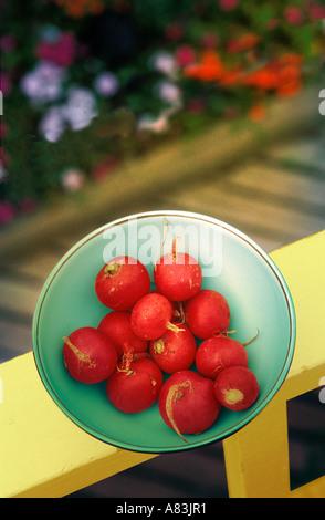 A bowl of fresh picked radishes - Stock Image