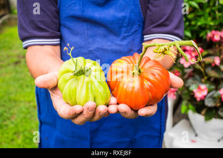 Environment and natural bio tomato vegetable products showed from old farmer lady - colors and nature for healthy food and lifestyle - vegetarian and  - Stock Image