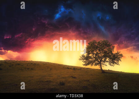 landscape background of lonely tree on hill with dramatic sky - Stock Image