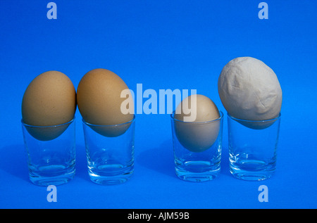 Hen s eggs Symbolic Forming pairs Couples can be very similar or very different - Stock Image