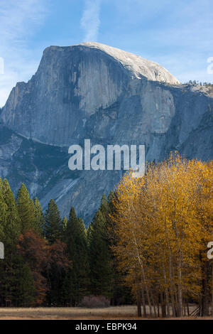 Half Dome and Aspen trees during fall. Yosemite Valley, Yosemite National Park, Mariposa County, California, USA - Stock Image