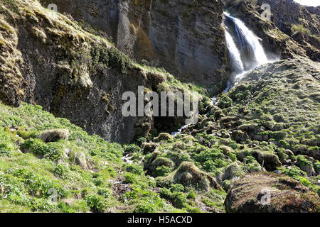 Moss and grass on rock around Skogafoss waterfall in Southern Iceland - Stock Image