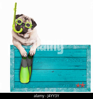 funny pug dog with blue vintage wooden beach sign, with goggles, snorkel and flippers for summer, isolated on white - Stock Image