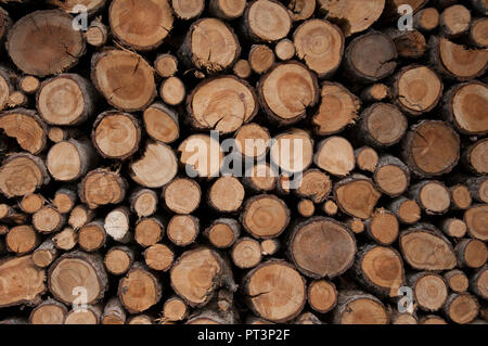 Firewood stockpiled for the next winter at Ferden in the Loetschental, Valais, Switzerland - Stock Image