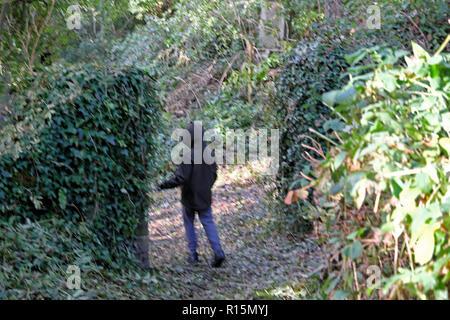 Rear view of a boy walking through a gap in ivy covered walls on a walking trail in Dinefwr Park Llandeilo Dyfed South Wales UK  KATHY DEWITT - Stock Image