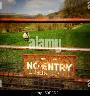 No Entry, to a farm field with sheep - Stock Image