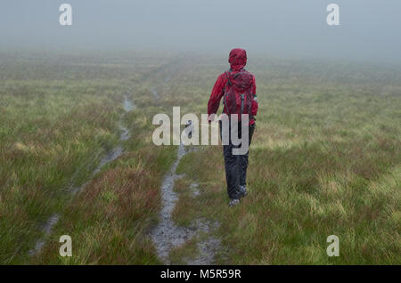 A hiker walking along with their dog in torrential rain on a hillside, England, UK. - Stock Image