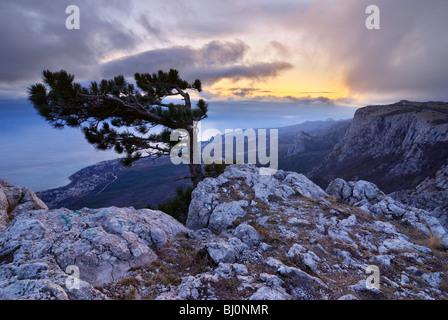 lonely tree growing on ai-petri mountain on crimea - Stock Image