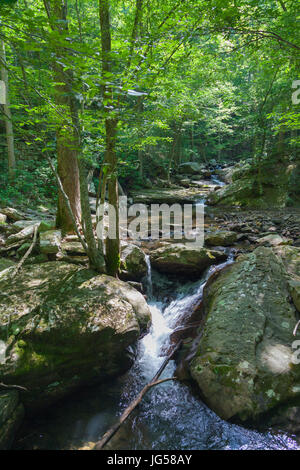 Laurel-Snow State Natural Area stream crossing from bridge - Stock Image