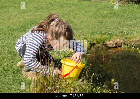young girl pond dipping in garden wildlife pond removing tadpoles in children's bucket, seven years old. UK. March. - Stock Image