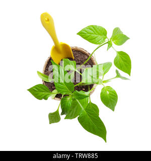 Gardening tools and seedlings. Isolated on white background. Top view - Stock Image