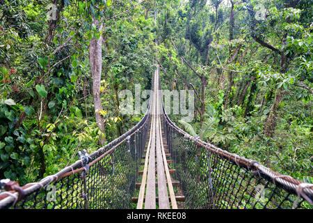 wooden footbridge path above green luxurious jungle - Stock Image