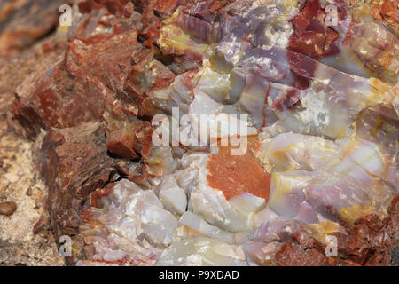 Close up of fossilized petrified wood along Giant Logs Trail in Petrified Forest National Park in Arizona - Stock Image