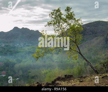 Lone tree on the mountain - Stock Image